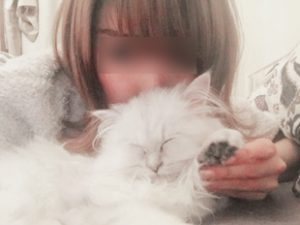 猫とグラビアモデル女性